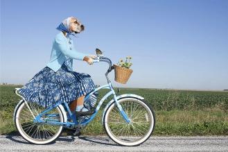 Собака велосипед