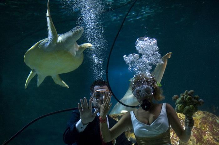 Под водой предложение