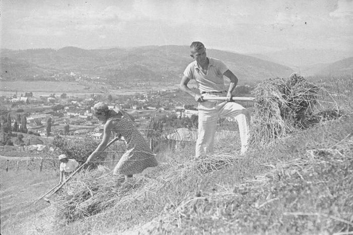 Комсомольцы на уборке сена Сочи 1936