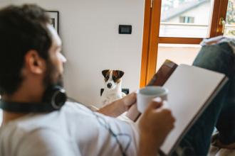 Книга собака