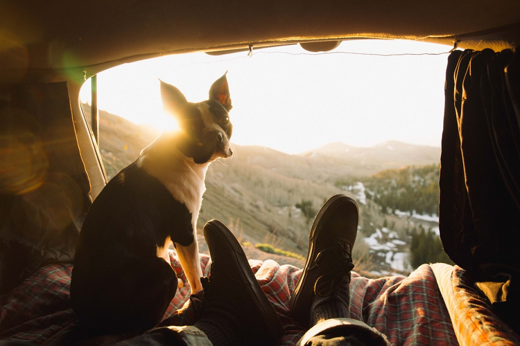 Собака палатка природа