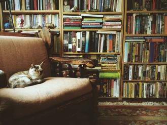 Книги котик