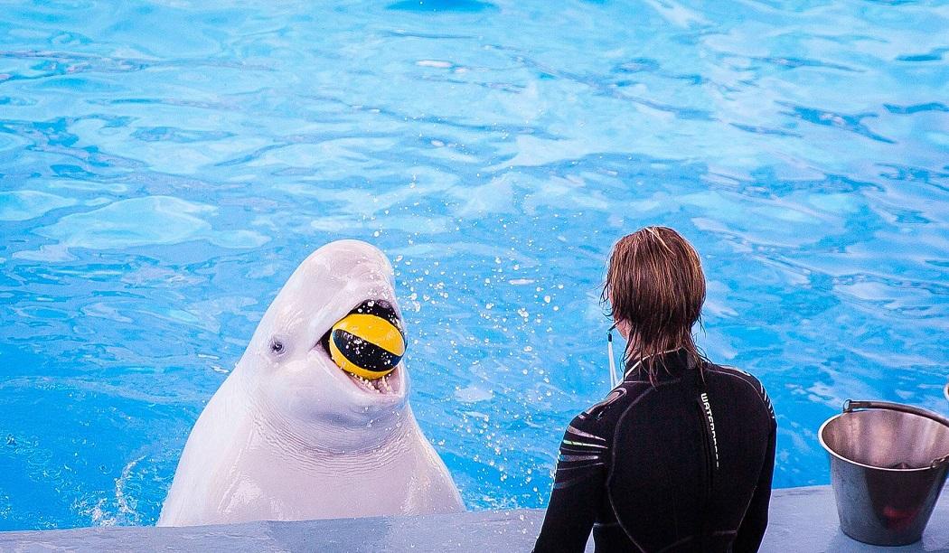 Большой сочинский дельфинарий Ривьера Сочи
