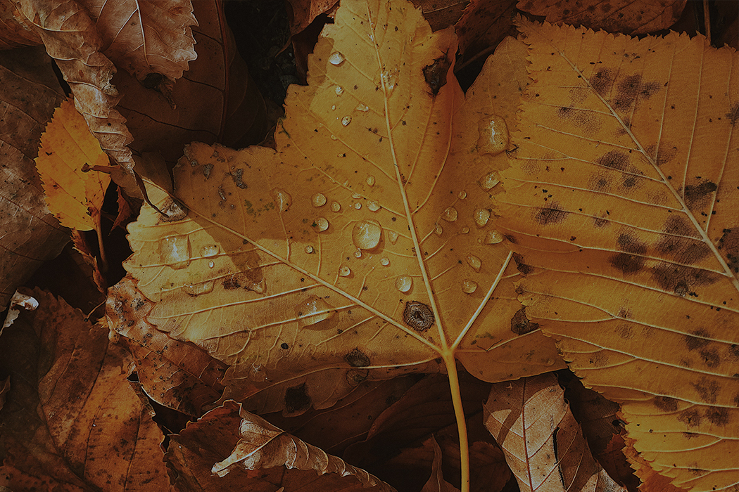 Листопад по-сочински. Собрали наиболее выдающиеся образцы