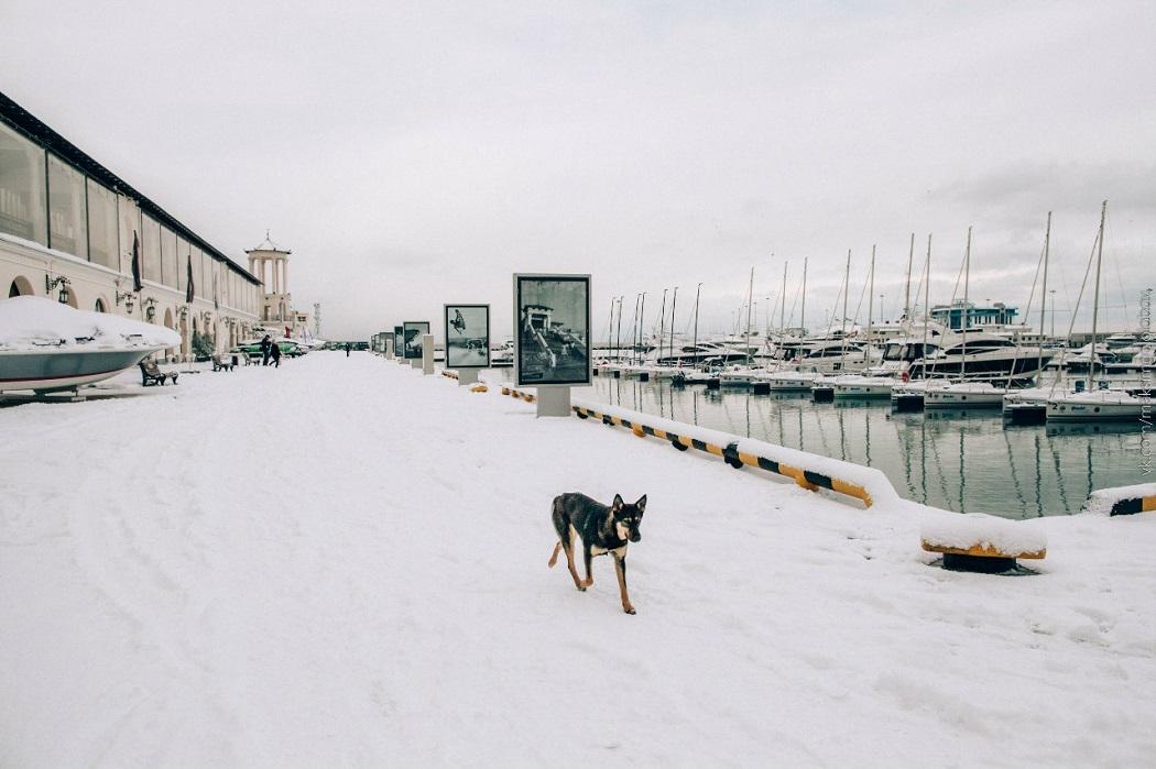 Сочи Зима фото